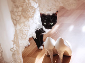 10 Pictures That Will Make You Want Your Pets in Your Wedding